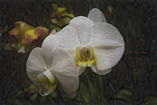 White Orchid  by Gary Rieks