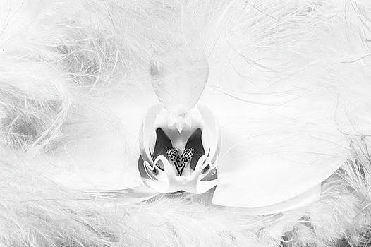 White Orchid with Boa by Jan Hagan
