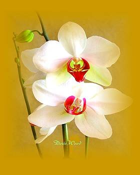 White Orchids by Doris Wood