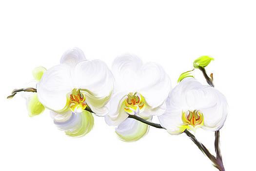 White Orchids by Ramona Murdock