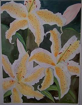 White Oriental by Sandra Woods