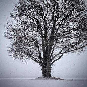 White Out #snowstorm #myfavoritetree by Carly Barone