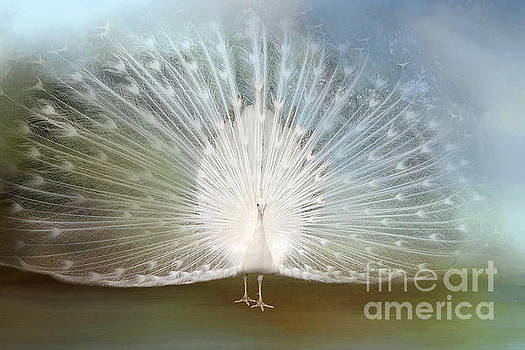 White Peacock in all His Glory by Bonnie Barry