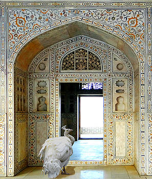 White Peacock in Mughal Palace by Aisha Abdelhamid