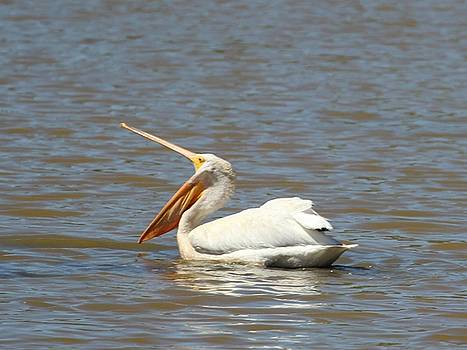 White Pelican Pouch by Gary Canant