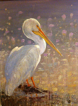 White Pelican by Sandy Reese