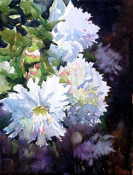 White Peonies by Spencer Meagher