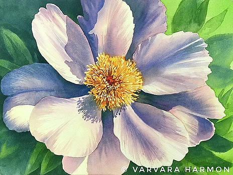 White Peony 2 by Varvara Harmon