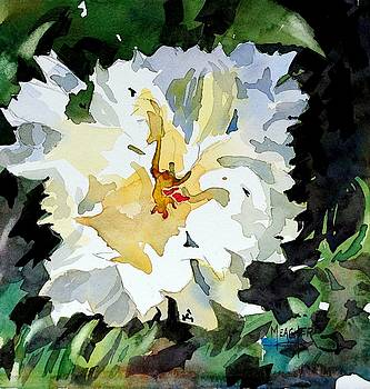 White Peony by Spencer Meagher