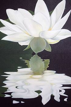 White petals by Dorothy Brooks