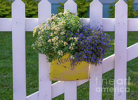 White Picket Fence Flower Basket by Dale Powell