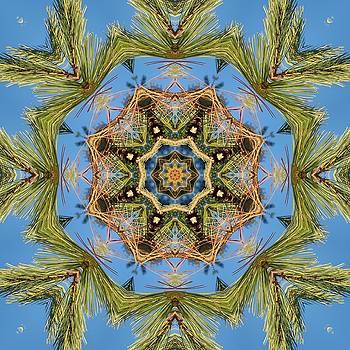 White pine branch mandala by R V James