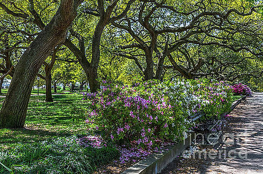 Dale Powell - White Point Garden Spring Stroll
