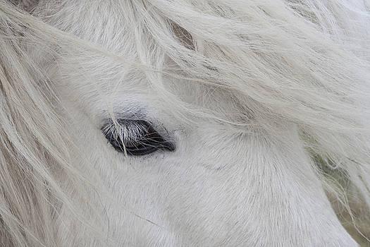 White Pony by Karen Van Der Zijden