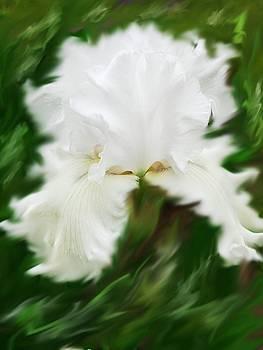 White Queen Iris by Jim  Darnall