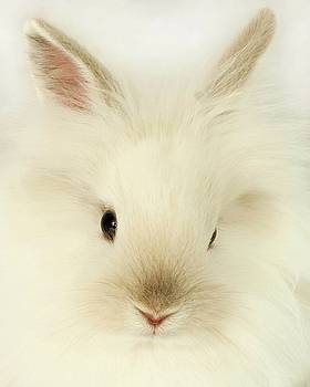 White Rabbit by Renee Althouse