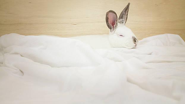 Sleeping Rabbit  by Jeanette Fellows