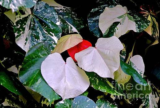 White, Red and Green by Craig Wood
