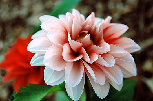 White Red Flower by Jame Hayes