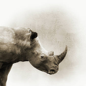 White Rhino Sepia Closeup Square by Susan Schmitz