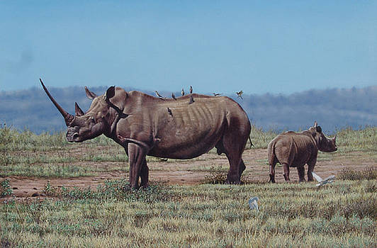White Rhinos by Eric Wilson