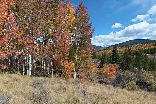 White River National Forest Autumn Landscape by Cascade Colors