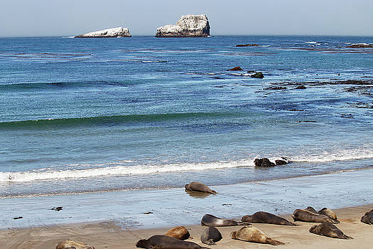 Art Block Collections - White Rocks and Elephant Seals
