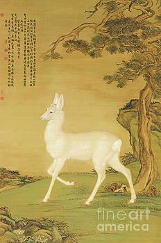 White Roe Deer by Giuseppe Castiglione