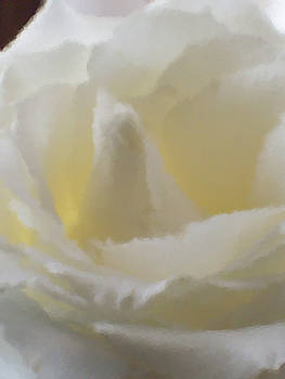 Michelle  BarlondSmith - White Rose Impression