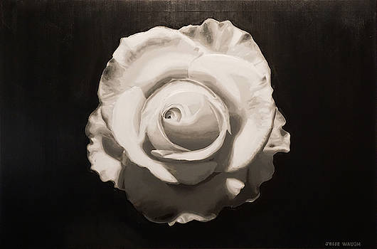 White Rose by Jesse Waugh