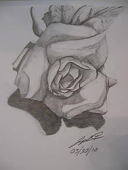White Rose by Joseph Bradley