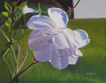 Lea Novak - White Rose