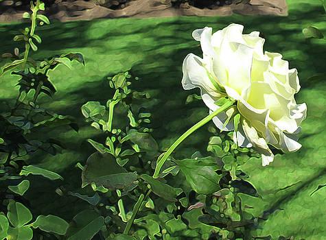 White Rose by Lynn Harrison