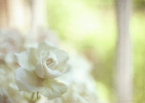 White Rose by Michael James