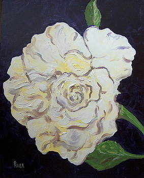White Rose by Pete Maier