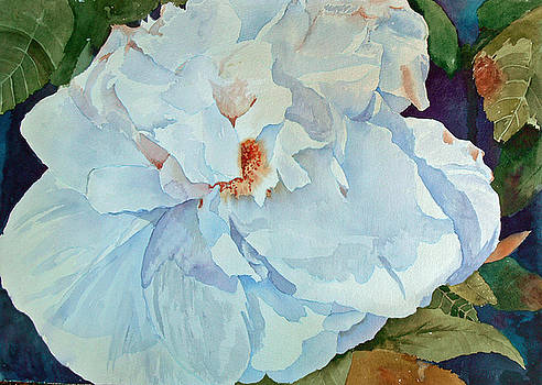 White Rose by Sandy Reese