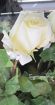 White Rose - Sympathy Card by Glenda Crigger