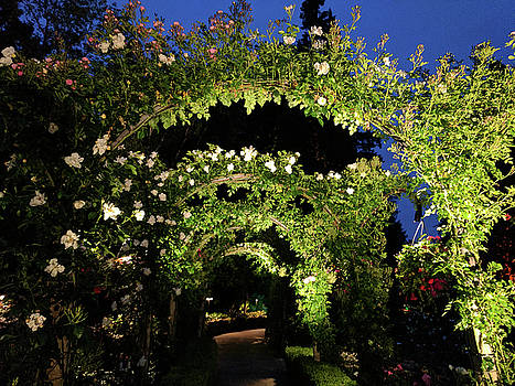 White rose tunnel at dusk by Michael Bessler