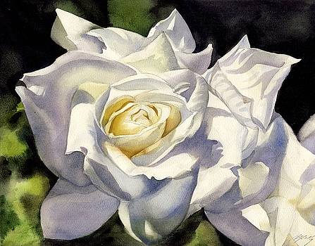 Alfred Ng - white rose watercolor