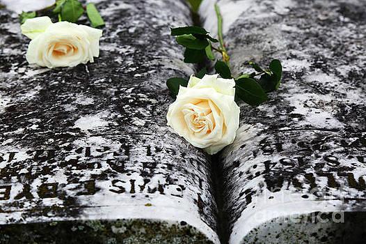 James Brunker - White Roses on Gravestone for Memorial Day