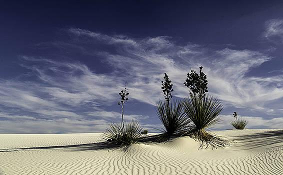 Bonnie Davidson - White Sands and Yucca Landscape