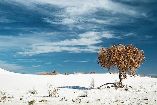 White Sands Blue Sky Winter Cottonwood by Mary Lee Dereske