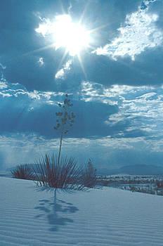 White Sands by Jennifer Ferrier