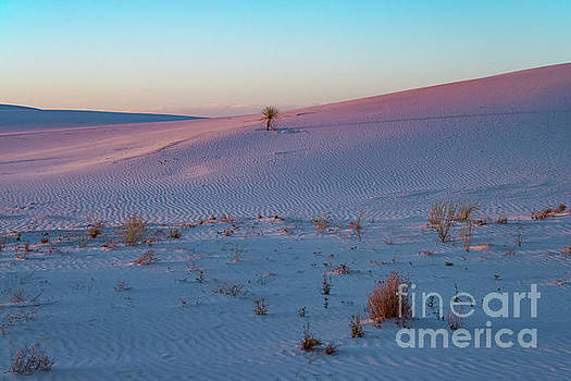 Bob Phillips - White Sands Pinks and Blues