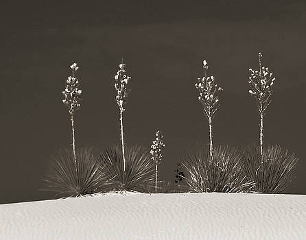 Allen Sheffield - White Sands Sentinels in Sepia