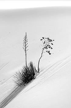 Jeff Brunton - White Sands Yucca 5