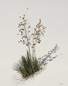 Allen Sheffield - White Sands Yucca