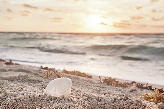 White Shell  by Evgeniya Lystsova