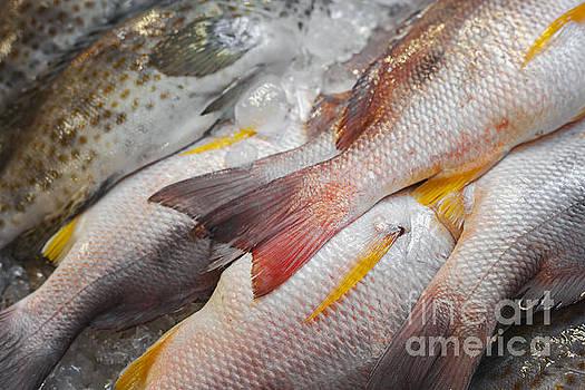 Sophie McAulay - White snapper fish