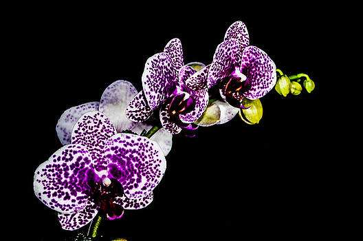 White speckles orchid  by Gerald Kloss